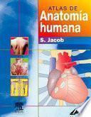Descargar el libro libro Atlas De Anatomía Humana