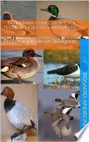 libro Taxidermia: Conceptos Y Vol TÉcnica. 1 Aves Segunda Parte   Preparación De Un Widgeon